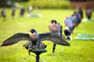 На Ставрополье обнаружены сайты по продаже краснокнижных птиц