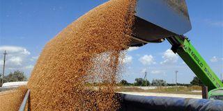 Экспорт зерна из Ставрополья в прошлом году сократился на 22%