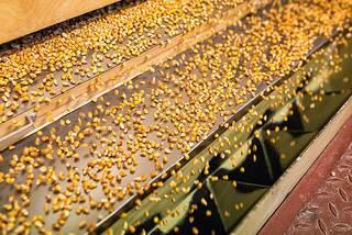 Иностранный инвестор построит на Ставрополье завод семян за 2,5 млрд рублей