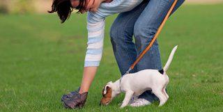 В Кисловодске владельцев собак обяжут убирать за своими питомцами