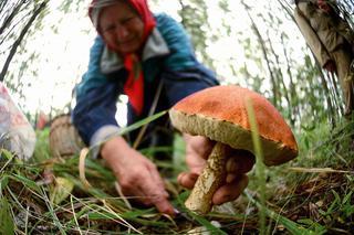 На Ставрополье с начала года 11 человек отравились грибами