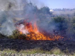 В Предгорном районе Ставрополья пожарные спасли от выгорания хвойный лес