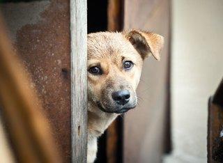 Двое жителей Ставрополья жестоко расправились с четырьмя бездомными щенками