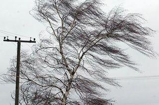 Жители Светлограда сняли на видео ураган