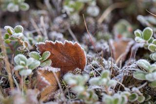 В МЧС Ставрополья предупредили о заморозках в выходные дни