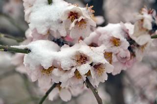 Заморозки на Ставрополье могут погубить плодовые культуры