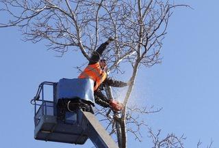 В Ставрополе за прошлый год упали 450 деревьев