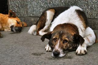 В Пятигорске догхантер убил семь собак на глазах местных жителей