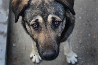 Полиция проводит проверку по фактам массового отстрела бездомных собак на КМВ