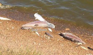 Причины массовой гибели рыбы выясняют на Ставрополье