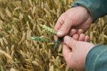 Новости: Урожай