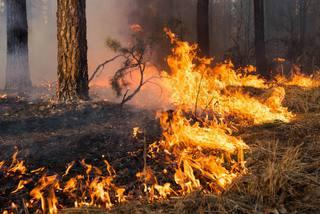 Виновника пожара у Сенгилеевского водохранилища оштрафовали на 3 тысячи рублей