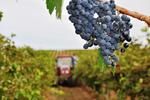 Новости: Законопроект о виноделии