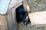 Новости: Жестокое обращение с животными