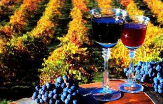 В Кисловодске пройдет День молодого вина