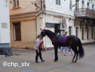 В парке Ставрополя лошадь сбила женщину с ребенком