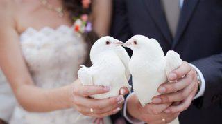 Пятигорск бьет новые рекорды по количеству свадеб и рождению детей