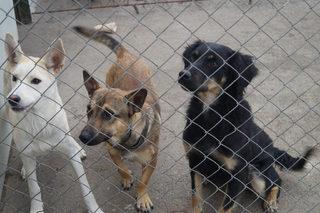 В курортной зоне Кисловодска приступили к отлову бездомных животных