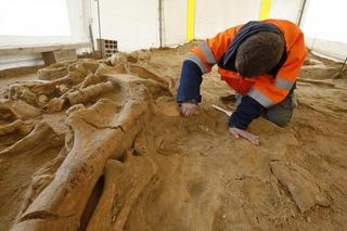 На Ставрополье найдены останки древнейшего большерогого оленя