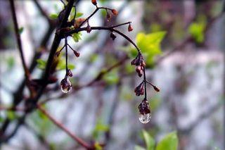 Синоптики прогнозируют дожди и потепление до 21 градуса на Ставрополье