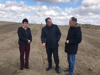 Ставрополью потребуется 2,7 млрд рублей на восстановление лесополос