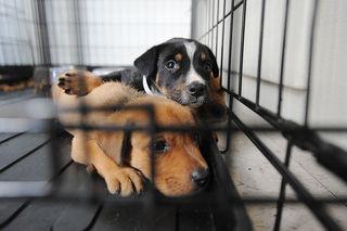 В Кисловодске построили приют для бездомных животных