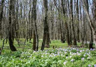 Власти Ставрополя увеличили площадь «Русского леса» на тысячу гектаров