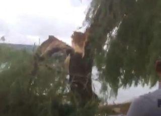 В Пятигорске дерево под напором ветра упало на двух женщин