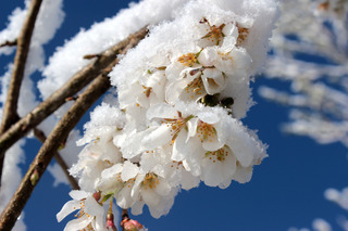 МЧС предупреждает о заморозках на Ставрополье