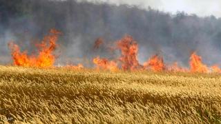 На Ставрополье пожар уничтожил пшеницу на 2 млн рублей
