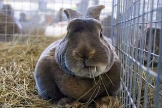 В Георгиевске вор украл с фермы 10 кроликов ценной породы