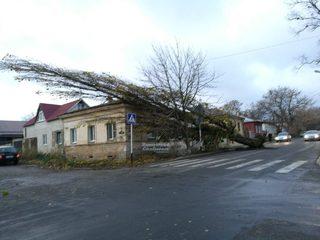 В Ставрополе ураганный ветер повалил дерево и сорвал рекламный кроссовок
